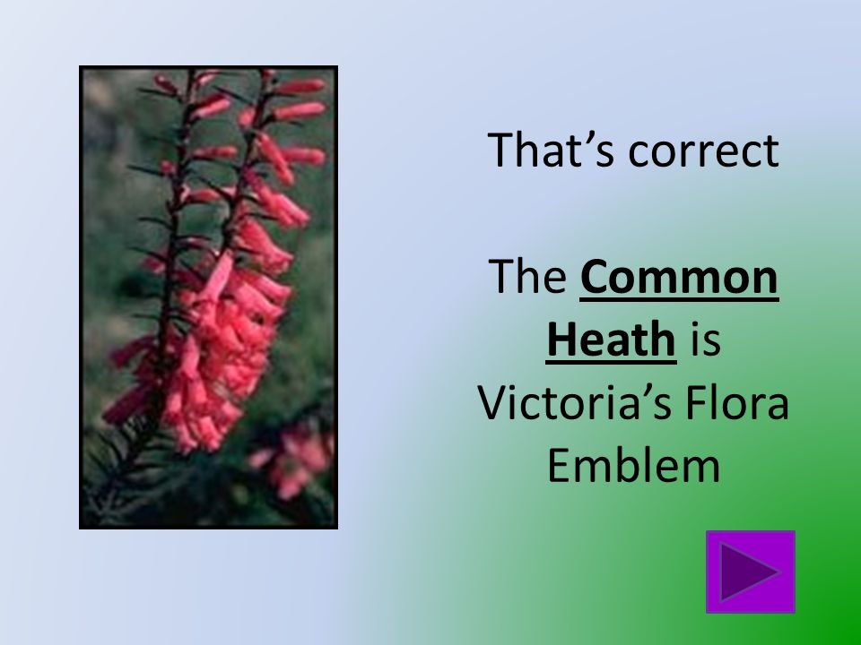 That is not Victoria's Flora Emblem Click on the button to go back and try again