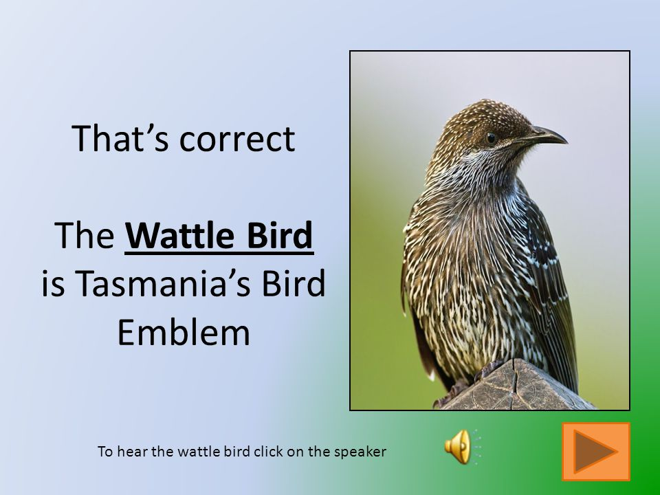 That is not Tasmania's Bird Emblem Click on the button to go back and try again