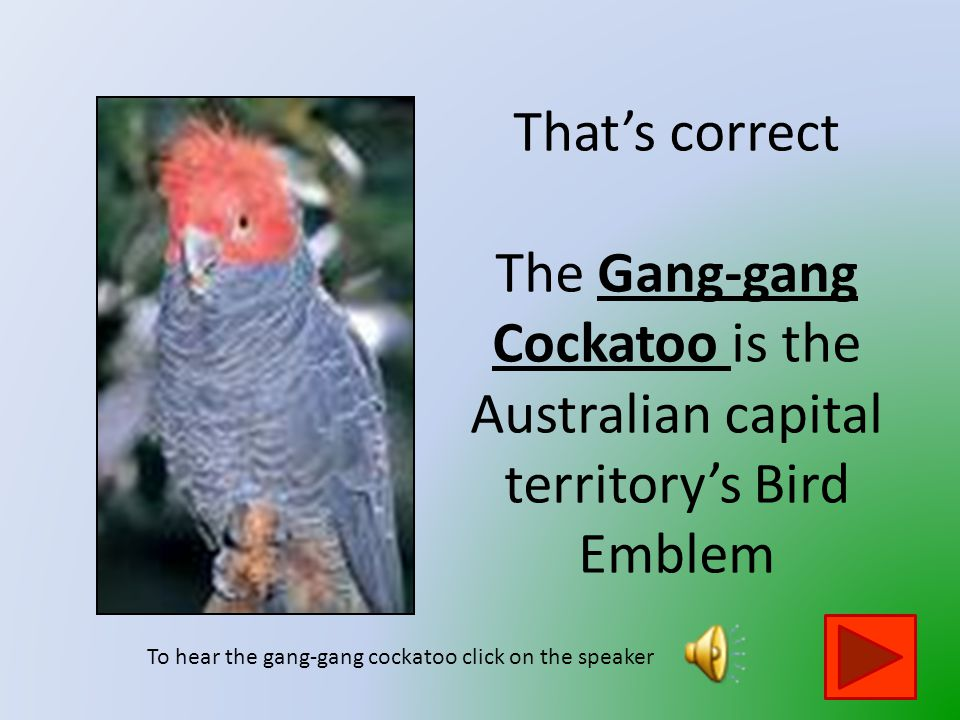 That is not the Australian Capital Territory 's Bird Emblem Click on the button to go back and try again