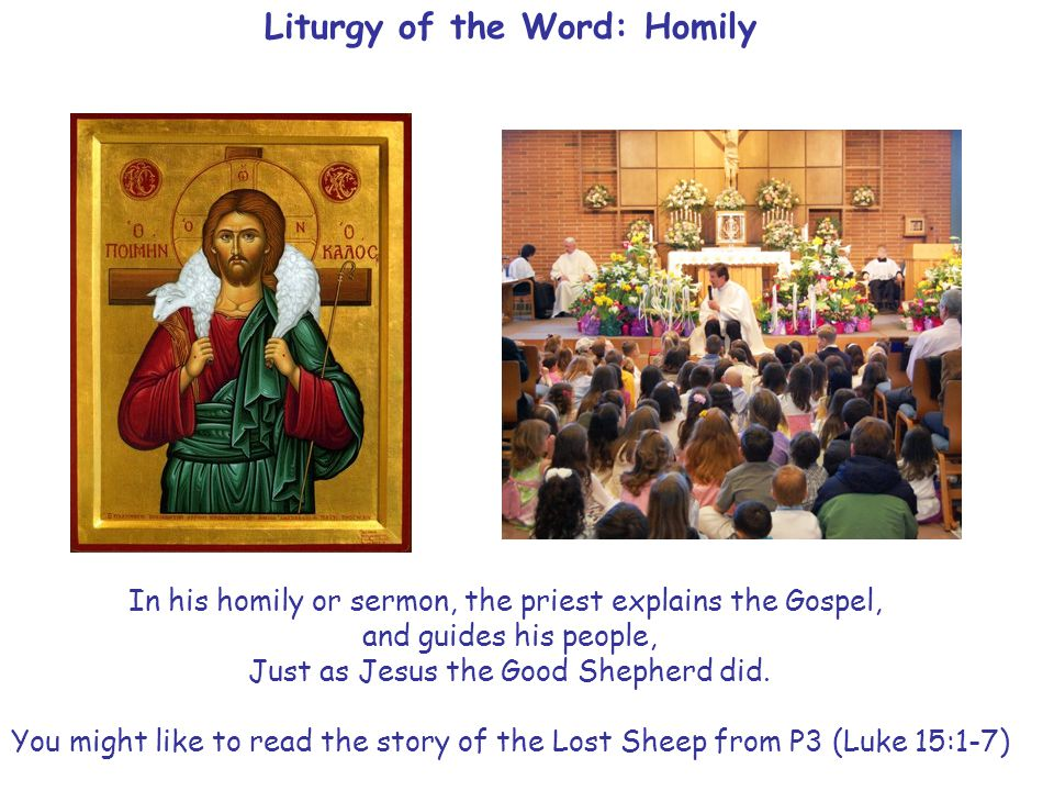 Liturgy of the Word: Homily In his homily or sermon, the priest explains the Gospel, and guides his people, Just as Jesus the Good Shepherd did.
