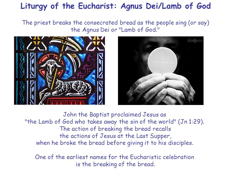 Liturgy of the Eucharist: Agnus Dei/Lamb of God The priest breaks the consecrated bread as the people sing (or say) the Agnus Dei or Lamb of God. John the Baptist proclaimed Jesus as the Lamb of God who takes away the sin of the world (Jn 1:29).