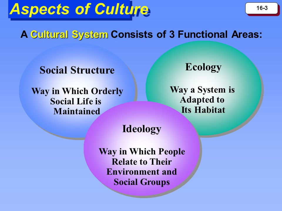 16-3 Aspects of Culture Social Structure Way in Which Orderly Social Life is Maintained Social Structure Way in Which Orderly Social Life is Maintaine
