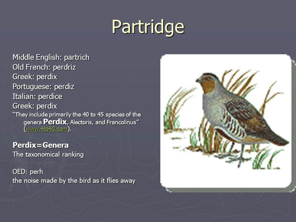 "Partridge Middle English: partrich Old French: perdriz Greek: perdix Portuguese: perdiz Italian: perdice Greek: perdix ""They include primarily the 40"