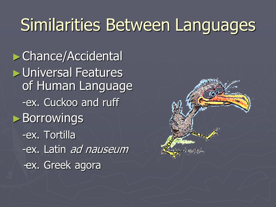 Similarities Between Languages ► Chance/Accidental ► Universal Features of Human Language -ex. Cuckoo and ruff ► Borrowings -ex. Tortilla -ex. Latin a