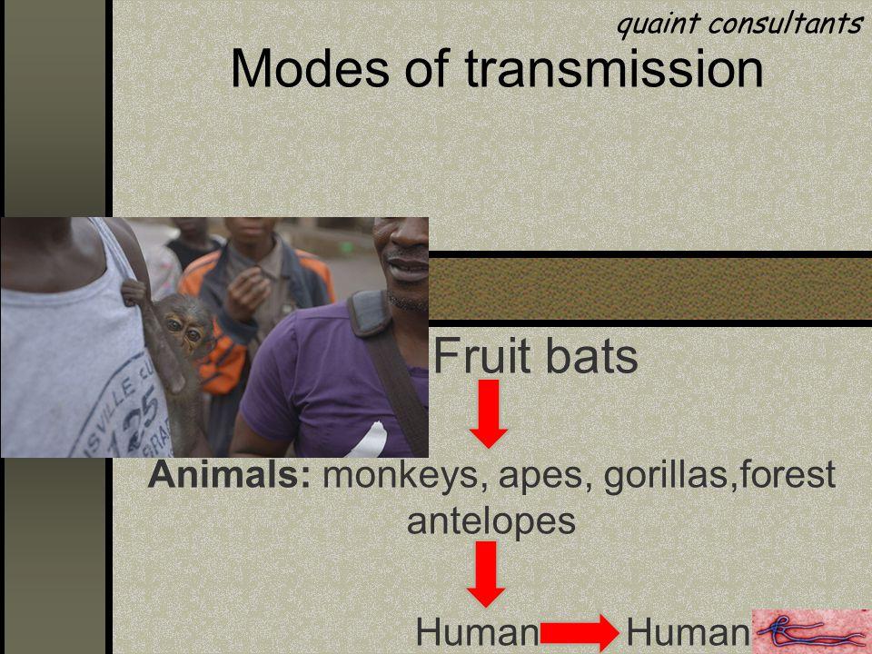 Modes of transmission Fruit bats Animals: monkeys, apes, gorillas,forest antelopes Human Human quaint consultants