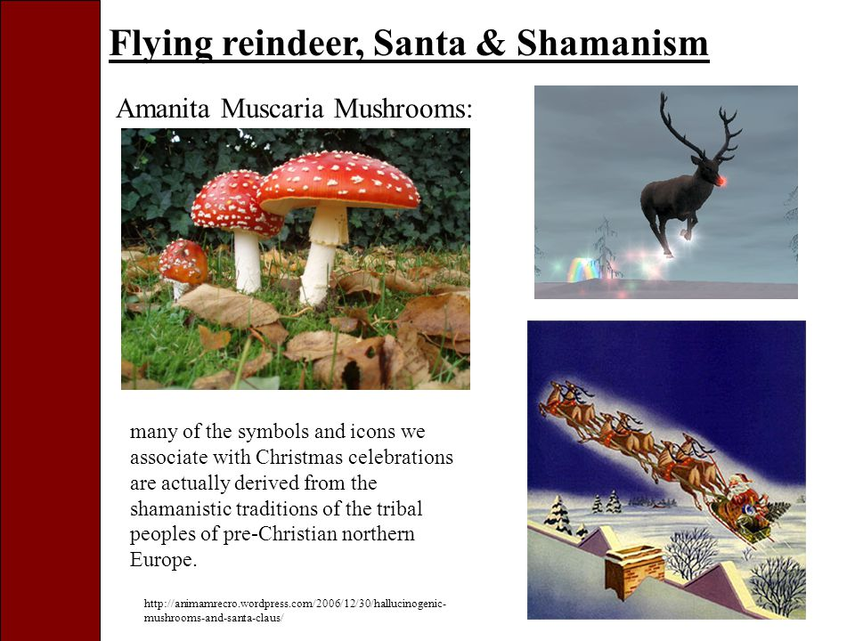 Flying reindeer, Santa & Shamanism Amanita Muscaria Mushrooms: http://animamrecro.wordpress.com/2006/12/30/hallucinogenic- mushrooms-and-santa-claus/ many of the symbols and icons we associate with Christmas celebrations are actually derived from the shamanistic traditions of the tribal peoples of pre-Christian northern Europe.