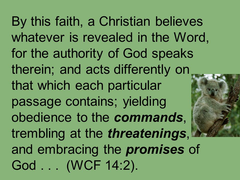 By this faith, a Christian believes whatever is revealed in the Word, for the authority of God speaks therein; and acts differently on that which each