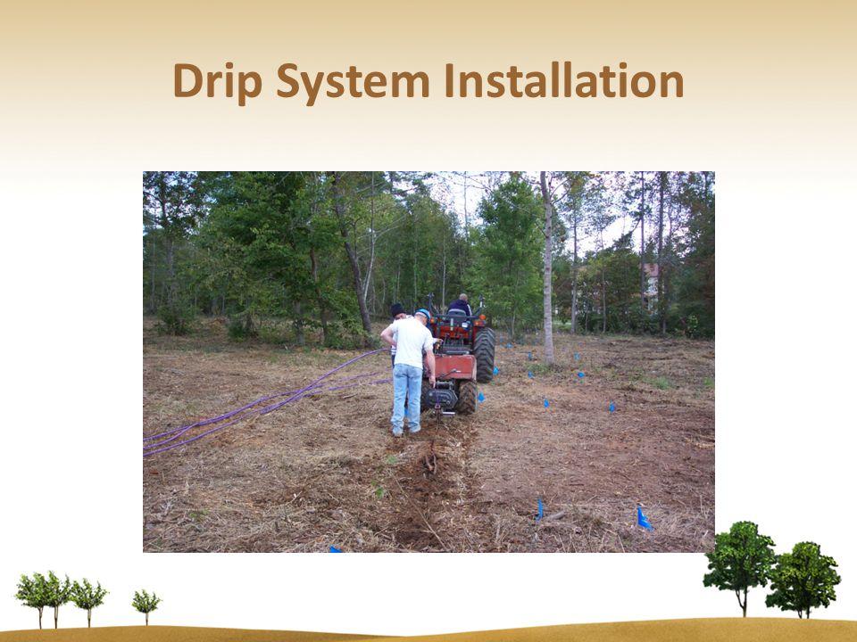 Drip System Installation
