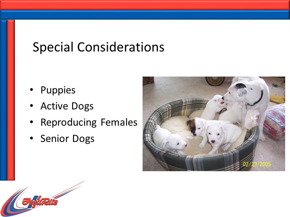 Special Considerations Puppies Active Dogs Reproducing Females Senior Dogs