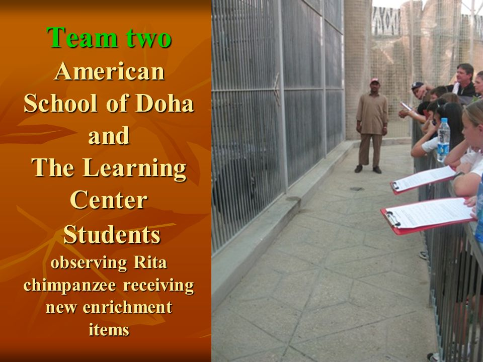 Team two American School of Doha and The Learning Center Students observing Rita chimpanzee receiving new enrichment items