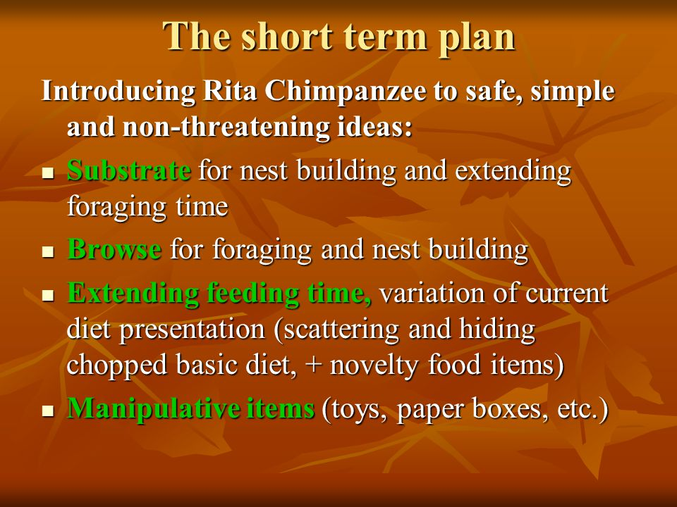 The short term plan Introducing Rita Chimpanzee to safe, simple and non-threatening ideas: Substrate for nest building and extending foraging time Substrate for nest building and extending foraging time Browse for foraging and nest building Browse for foraging and nest building Extending feeding time, variation of current diet presentation (scattering and hiding chopped basic diet, + novelty food items) Extending feeding time, variation of current diet presentation (scattering and hiding chopped basic diet, + novelty food items) Manipulative items (toys, paper boxes, etc.) Manipulative items (toys, paper boxes, etc.)