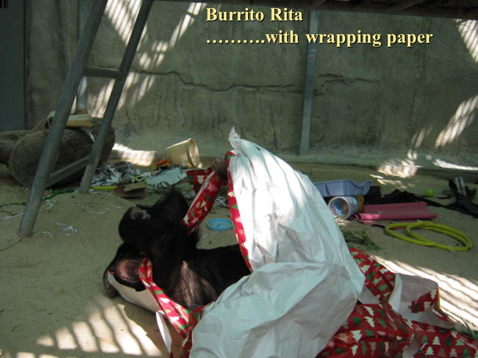 Burrito Rita ……….with wrapping paper