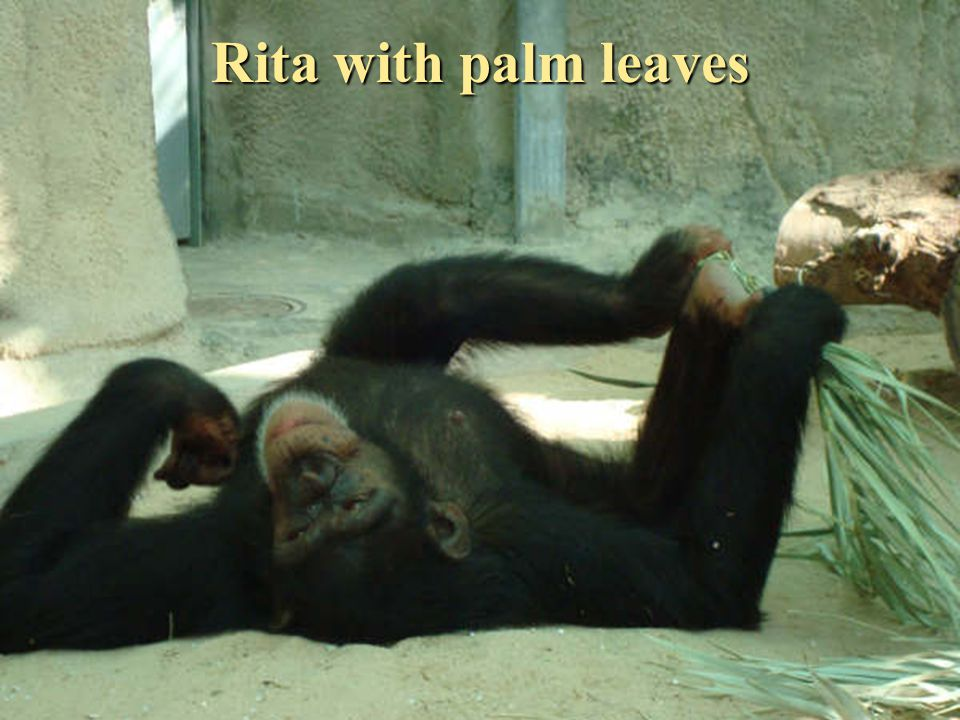 Rita with palm leaves