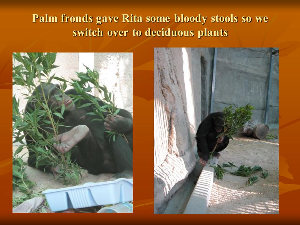 Palm fronds gave Rita some bloody stools so we switch over to deciduous plants