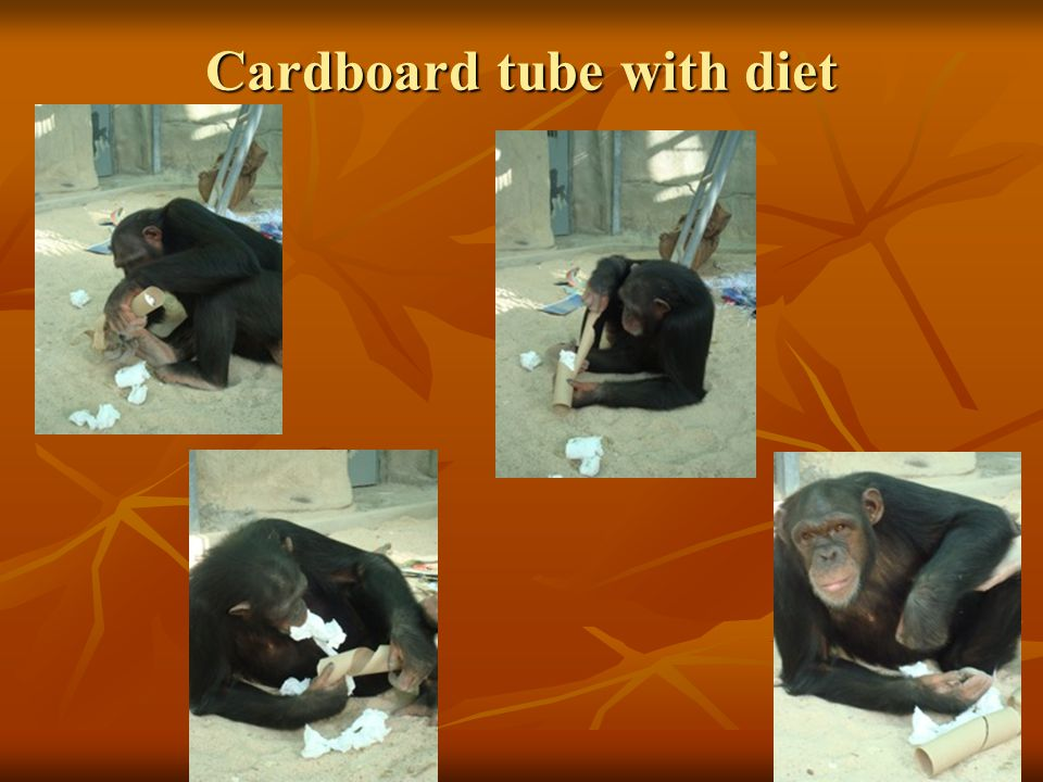 Cardboard tube with diet