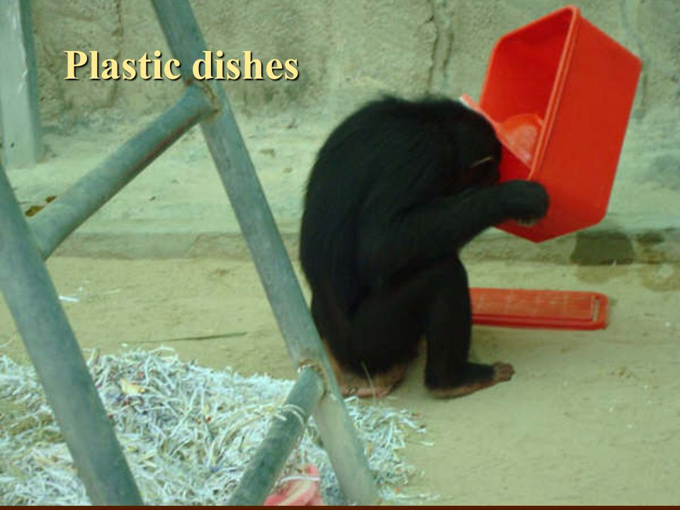Plastic dishes