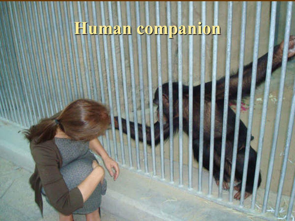 Human companion