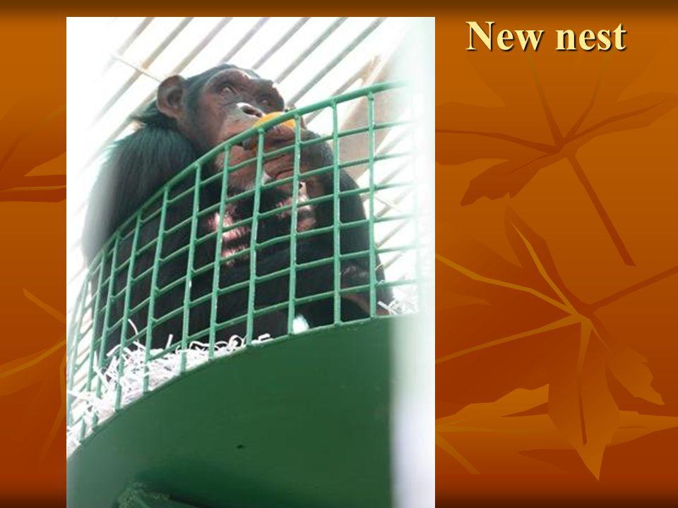 New nest New nest