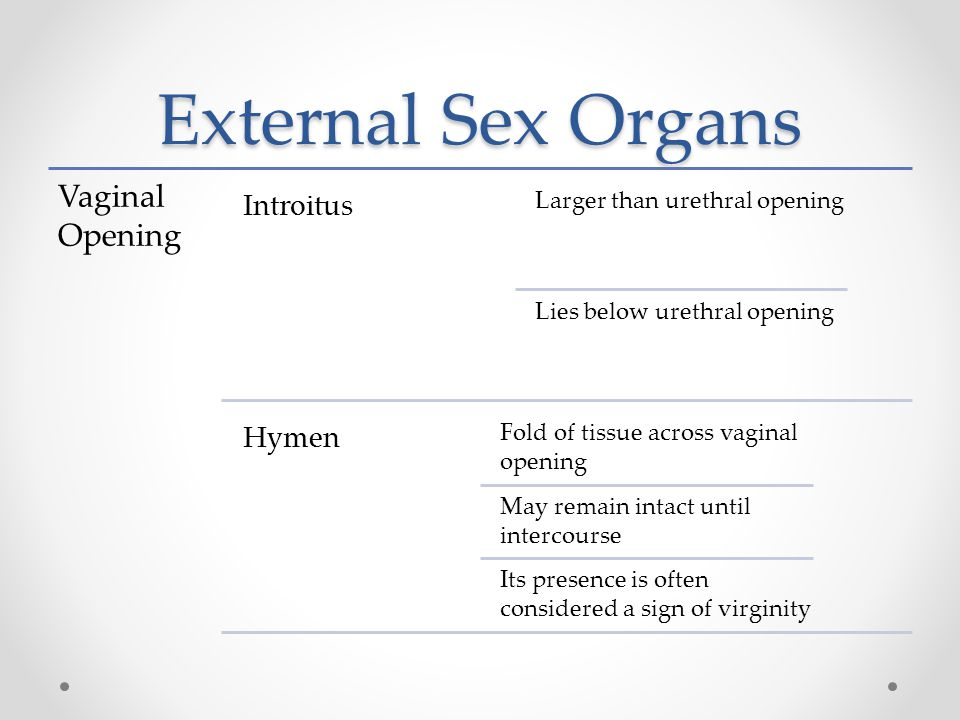 External Sex Organs Vaginal Opening Introitus Larger than urethral opening Lies below urethral opening Hymen Fold of tissue across vaginal opening May remain intact until intercourse Its presence is often considered a sign of virginity