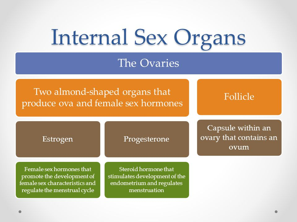 Internal Sex Organs The Ovaries Two almond-shaped organs that produce ova and female sex hormones Estrogen Female sex hormones that promote the development of female sex characteristics and regulate the menstrual cycle Progesterone Steroid hormone that stimulates development of the endometrium and regulates menstruation Follicle Capsule within an ovary that contains an ovum