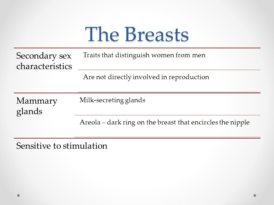 The Breasts Secondary sex characteristics Traits that distinguish women from men Are not directly involved in reproduction Mammary glands Milk-secreting glands Areola – dark ring on the breast that encircles the nipple Sensitive to stimulation
