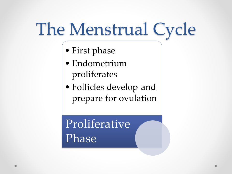 The Menstrual Cycle First phase Endometrium proliferates Follicles develop and prepare for ovulation Proliferative Phase
