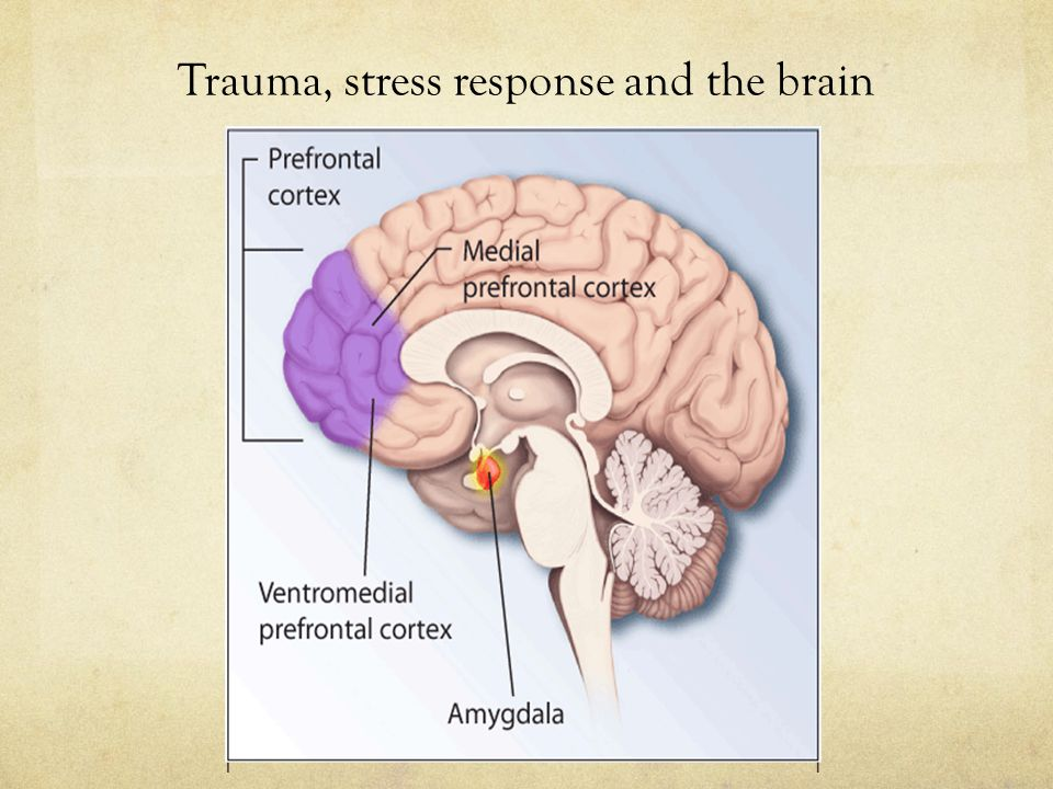 Trauma, stress response and the brain