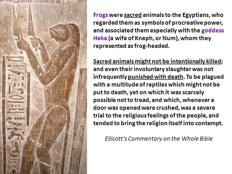 Frogs were sacred animals to the Egyptians, who regarded them as symbols of procreative power, and associated them especially with the goddess Heka (a wife of Kneph, or Num), whom they represented as frog-headed.