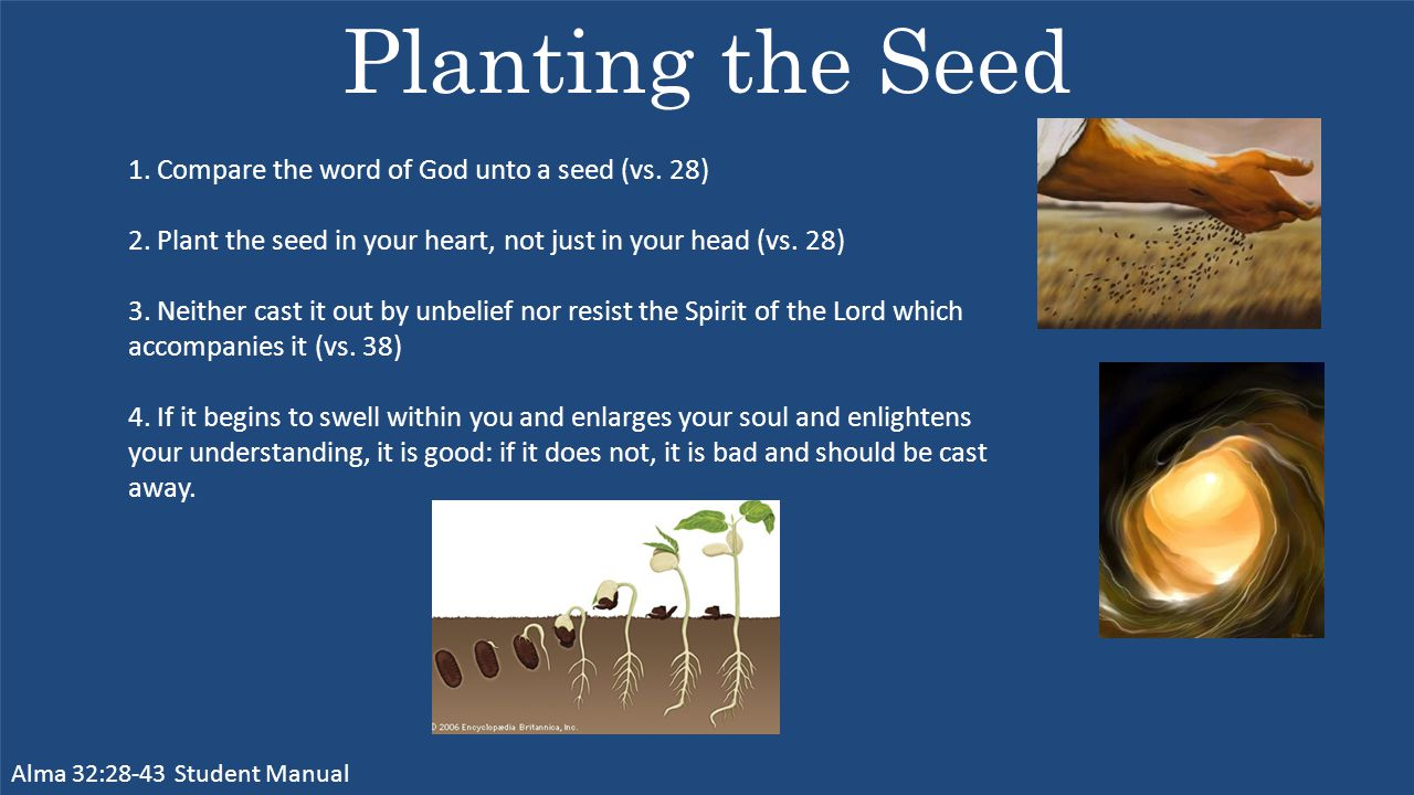 Planting the Seed Alma 32:28-43 Student Manual 1. Compare the word of God unto a seed (vs.