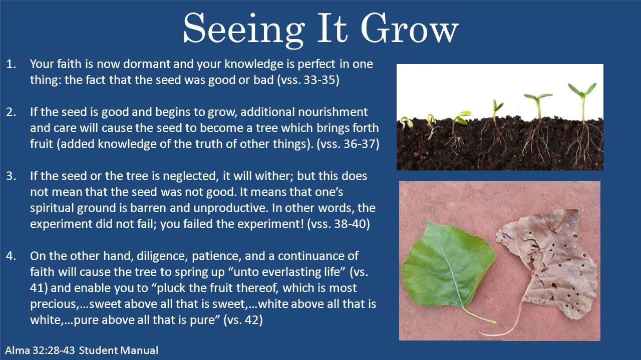 Seeing It Grow Alma 32:28-43 Student Manual 1.Your faith is now dormant and your knowledge is perfect in one thing: the fact that the seed was good or bad (vss.