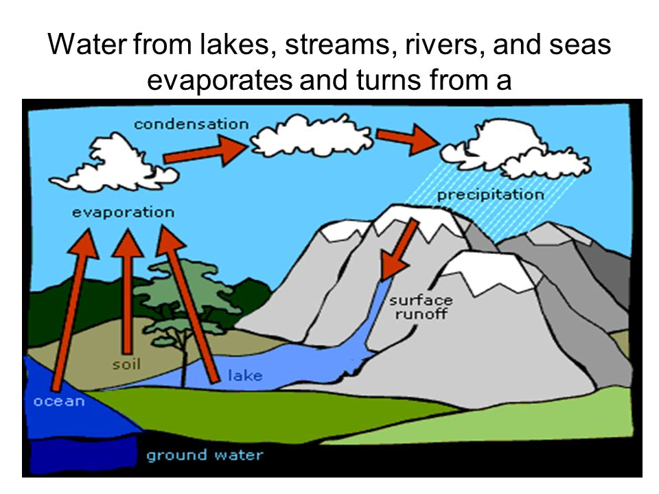 Water from lakes, streams, rivers, and seas evaporates and turns from a