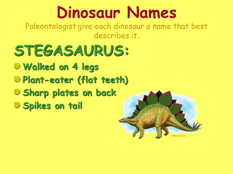 Dinosaur Names Paleontologist give each dinosaur a name that best describes it.