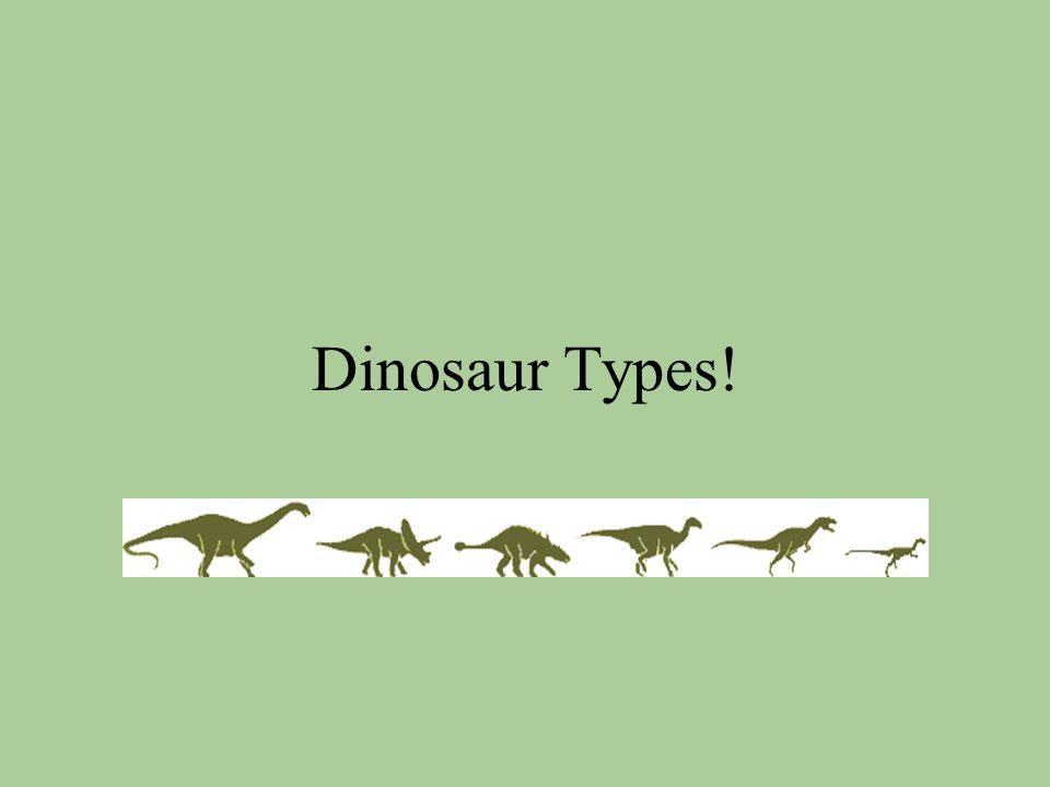 Dinosaur Types!