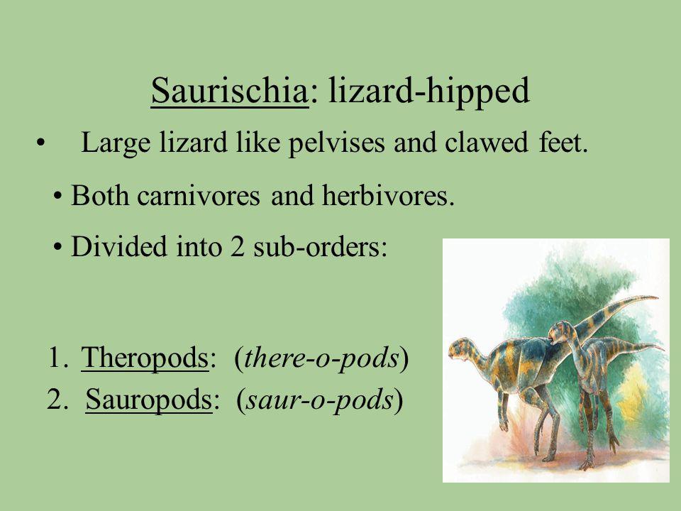 Saurischia: lizard-hipped Large lizard like pelvises and clawed feet.