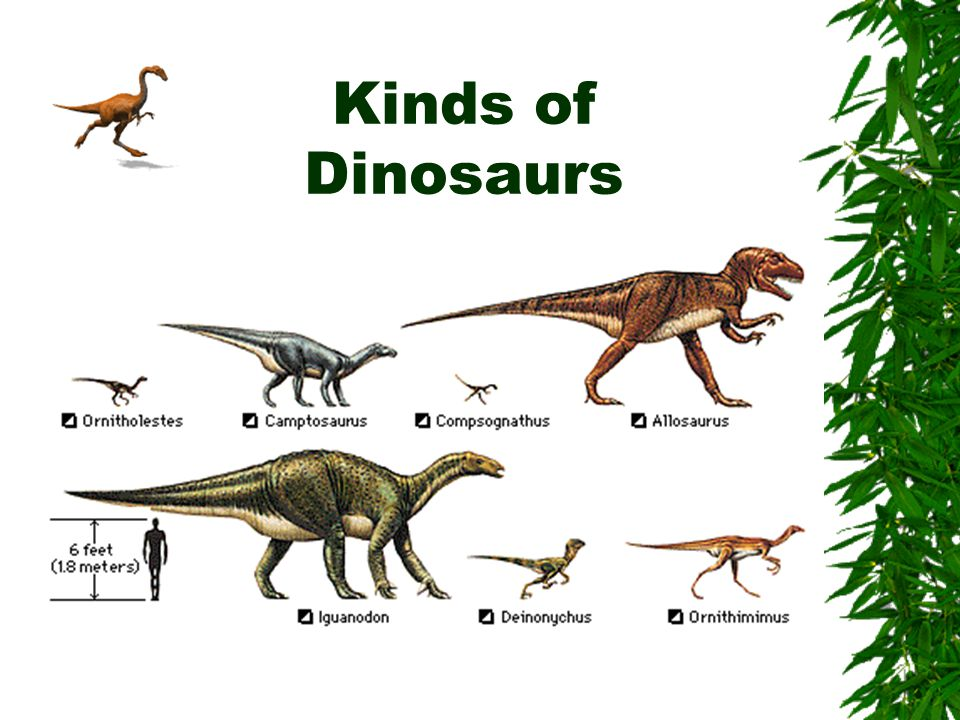 Kinds of Dinosaurs