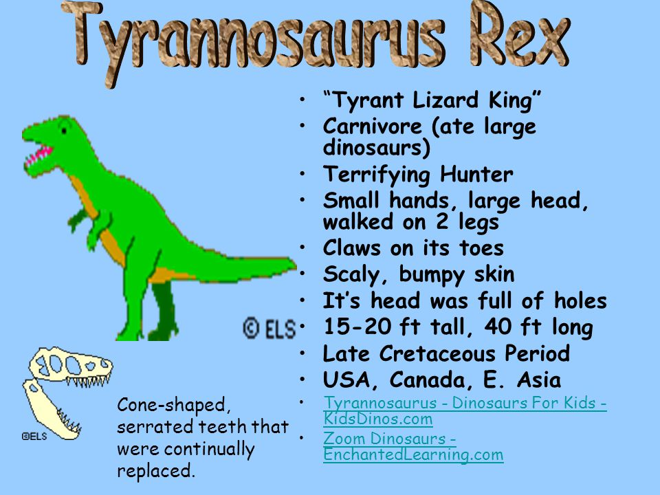 """Tyrant Lizard King"" Carnivore (ate large dinosaurs) Terrifying Hunter Small hands, large head, walked on 2 legs Claws on its toes Scaly, bumpy skin I"