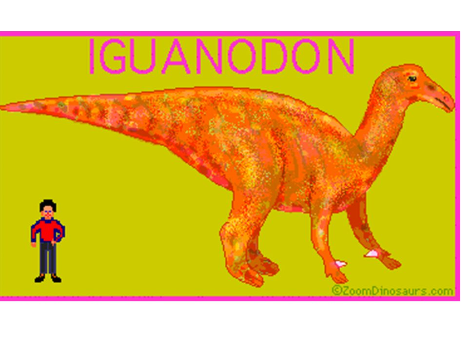 Iguanodon Iguana tooth Herbivore (plant eating) Used their spiky thumbs for defense Lived in the early Cretaceous period