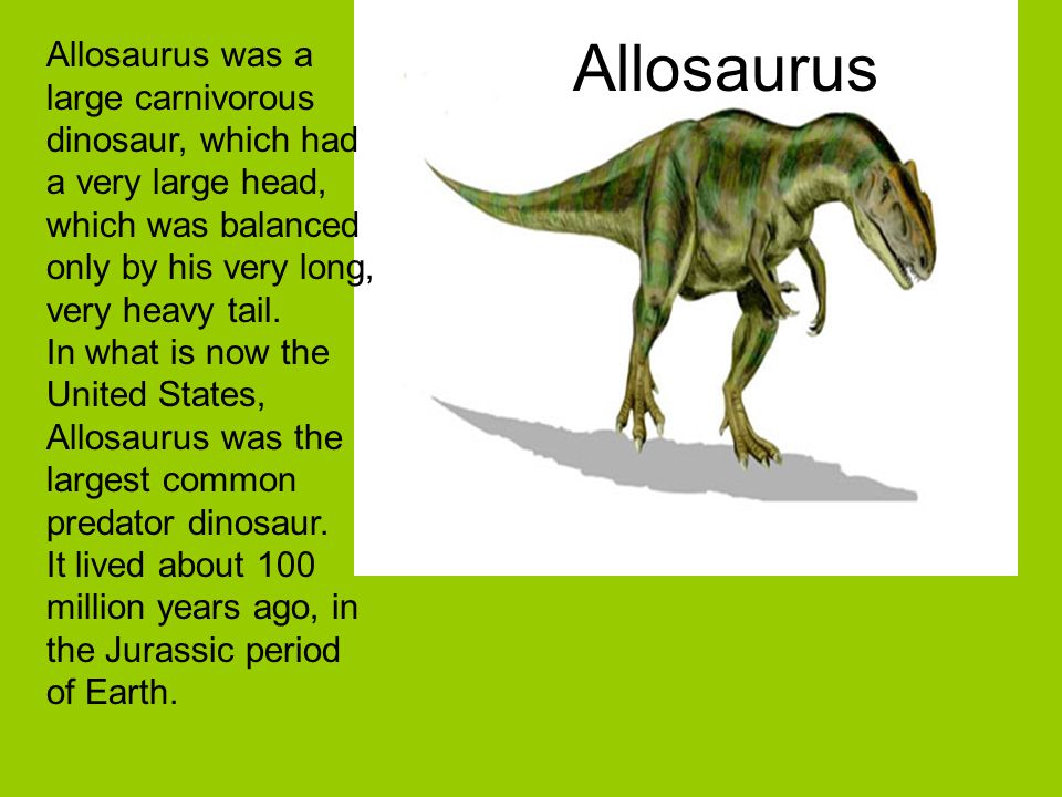Allosaurus Allosaurus was a large carnivorous dinosaur, which had a very large head, which was balanced only by his very long, very heavy tail. In wha