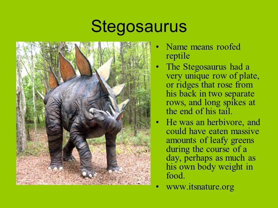Stegosaurus Name means roofed reptile The Stegosaurus had a very unique row of plate, or ridges that rose from his back in two separate rows, and long