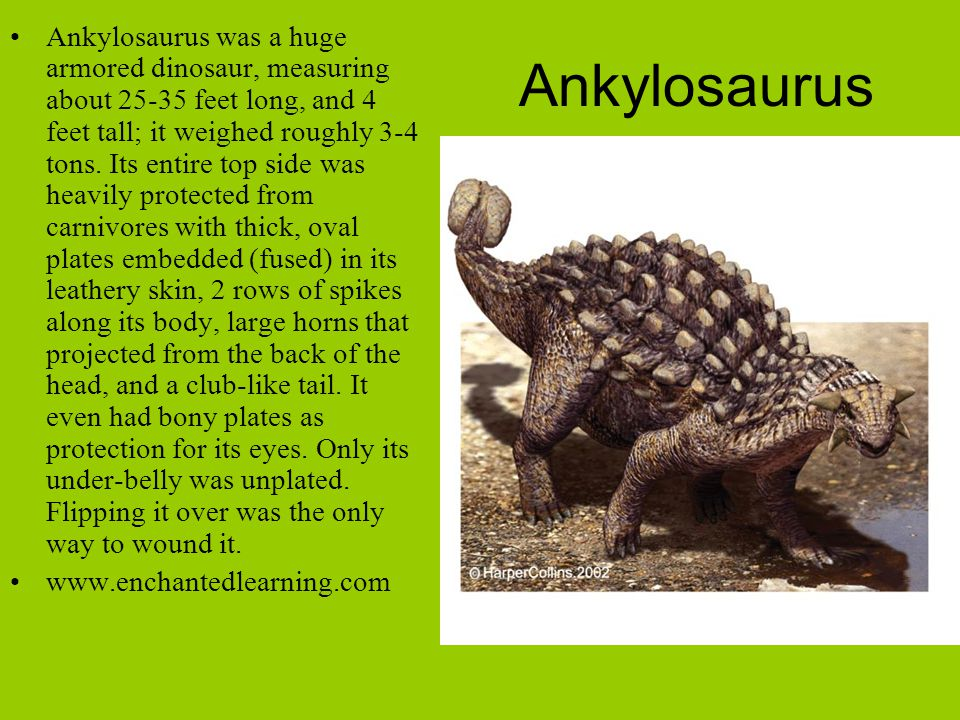 Ankylosaurus Ankylosaurus was a huge armored dinosaur, measuring about 25-35 feet long, and 4 feet tall; it weighed roughly 3-4 tons. Its entire top s