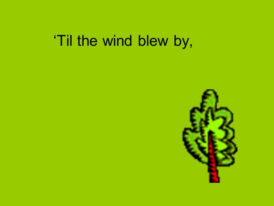 'Til the wind blew by,