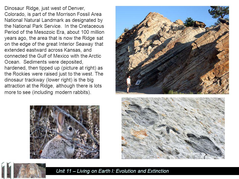 Unit 11 – Living on Earth I: Evolution and Extinction Matt Spencer with dinosaur track, Dinosaur Ridge, near Denver.