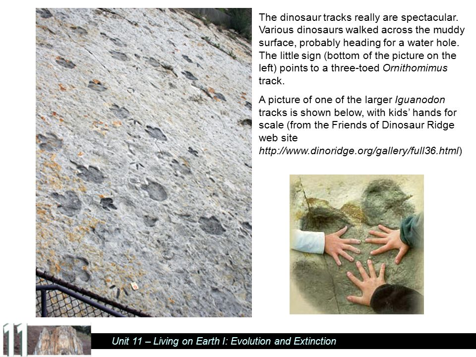Unit 11 – Living on Earth I: Evolution and Extinction Close-up of previous picture, with dinosaur track outlined.