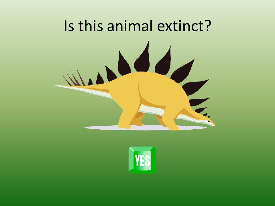 Is this animal extinct