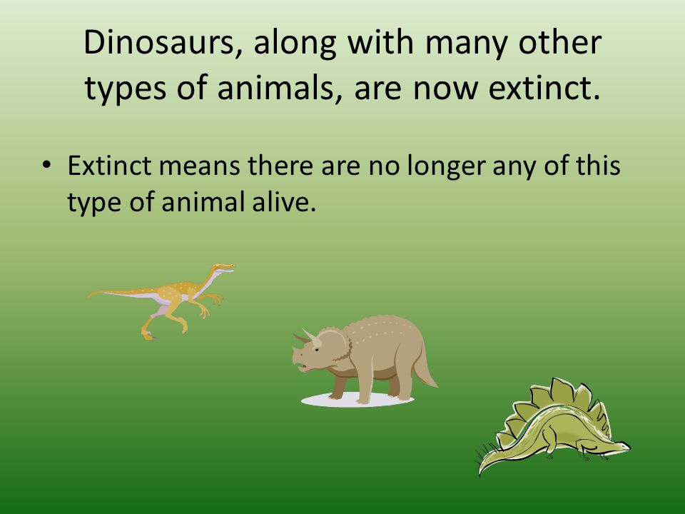 Why did dinosaurs become extinct.