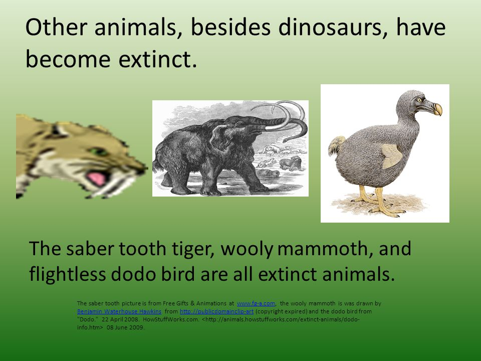 Dinosaurs, along with many other types of animals, are now extinct.