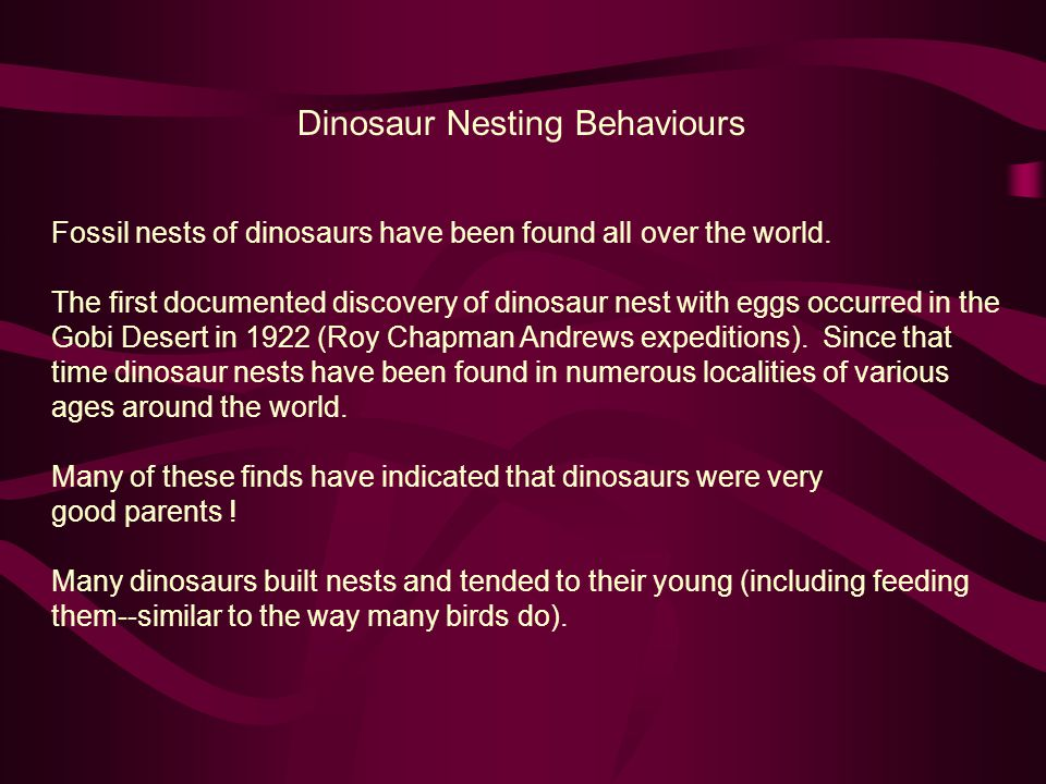 Dinosaur Nesting Behaviours Fossil nests of dinosaurs have been found all over the world. The first documented discovery of dinosaur nest with eggs oc