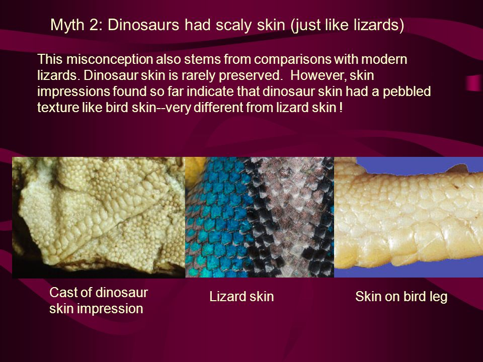 Myth 2: Dinosaurs had scaly skin (just like lizards) This misconception also stems from comparisons with modern lizards. Dinosaur skin is rarely prese