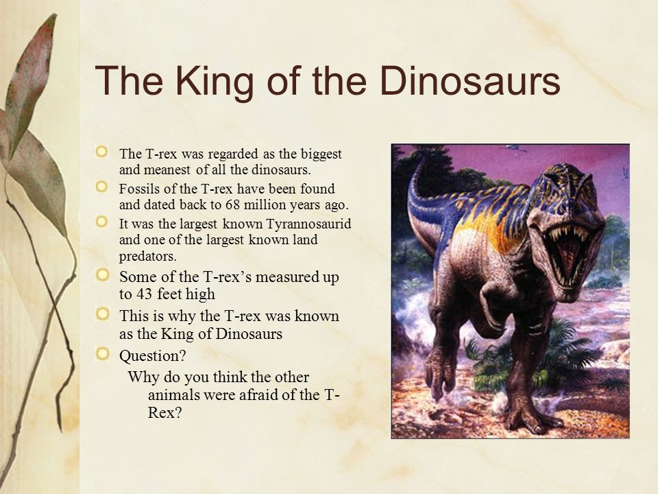 The King of the Dinosaurs The T-rex was regarded as the biggest and meanest of all the dinosaurs. Fossils of the T-rex have been found and dated back