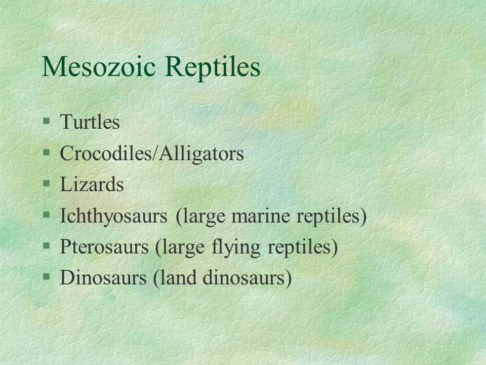Mesozoic Reptiles §Turtles §Crocodiles/Alligators §Lizards §Ichthyosaurs (large marine reptiles) §Pterosaurs (large flying reptiles) §Dinosaurs (land dinosaurs)